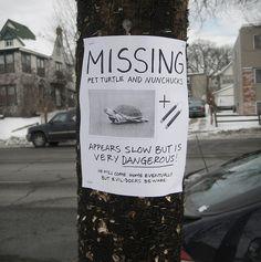 Ninja Turtle Missing - 17 Hilarious Street Posters You Certainly Haven't Seen Around Funny Street Signs, Funny Signs, Phil Jones, Pet Turtle, Smosh, Photos Of The Week, Teenage Mutant Ninja Turtles, Teenage Ninja, Tmnt