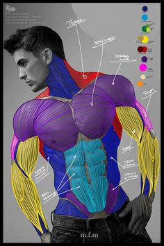 demekin:   Anatomy Study by LeRenart on DeviantArt - Art References
