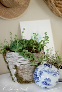 Birch covered terracotta pot tutorial