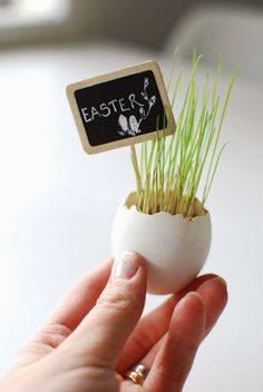 Grass gowing in an egg with tiny chalkboard stake. Would be great for seating arrangement on an Easter table. Happy Easter, Easter Bunny, Easter Eggs, Elegant Centerpieces, Easter Colors, Easter Table, Vintage Easter, Spring Green, Spring Flowers