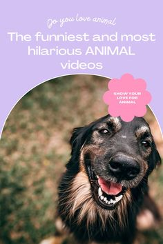 50 funny animal videos to watch with your kids Companion Dog Excellent. follow me for more! #dog #dogs #pet #doglover #doggy #puppy #puppies #puppys #dogoftheday #doglove #dogphotography #dogvideos #dogvideo dog, dogs, doglover Funny Animal Videos, Funny Animals, Cute Animals, Companion Dog, Cute Dogs And Puppies, Dog Photography, Super Funny, Funny Dogs, Animal Pictures