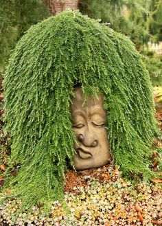 Weeping Hemlock at The Oregon Garden To My Family: And you really believed this was a picture of me!!!