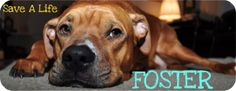 *** CRITICAL SITUATION** FOSTERS ARE DESPERATELY NEEDED** Due to the large amount of dogs that we have been getting returned. SCR is in a critical situation. We can not accept any new dogs into our rescue at this time,  full to our capacity!!!!  Desperately need foster homes, for dogs who are in boarding right now. We are freezing our intake, and turning dogs away right now, which breaks our hearts. Please fill out a foster application at www.nycsecondchancerescue.org