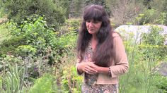Rosemary Gladstar& Garden Wisdoms: Cilantro, Dill, and Carrot Family Plants - Watch Video Herbal Plants, Medicinal Plants, Natural Medicine, Herbal Medicine, Herbal Remedies, Natural Remedies, Rosemary Gladstar, Identify Plant, Plant Magic