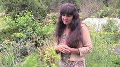 Rosemary Gladstar's Garden Wisdoms: Cilantro, Dill, and Carrot Family Pl...
