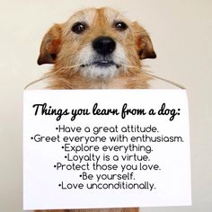 Things you learn from a dog...