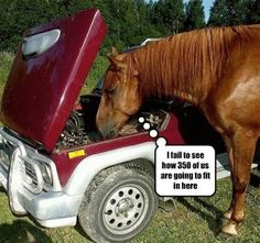funny horse quotes and sayings Funny Horse Pictures, Funny Horses, Funny Animals, Cute Animals, Funny Pics, Funny Horse Sayings, Videos Funny, Crazy Pictures, Funny Memes
