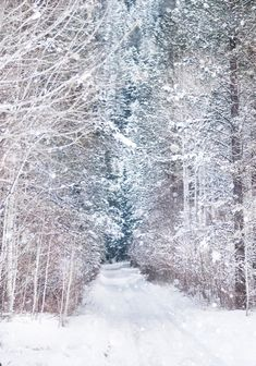 Winter wonderland.