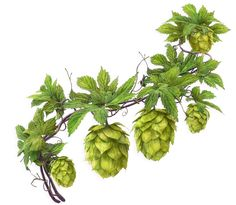 creating models and visualization for print compain Hops Vine, Vine Drawing, Hops Plant, Beer Hops, Vine Tattoos, Plant Tattoo, Technical Illustration, Beer Art, Brew Pub