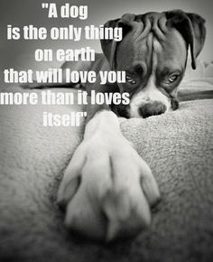 A dog is a best friend...