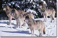 Kwadacha Wilderness Provincial Park, Northern British Columbia provides habitat for wolves