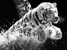 A arte da fotografia preto e branco