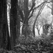 Valokuvatapetti - Tropical Forest - b/w