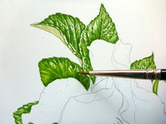 Lizzie Harper step by step of botancial sketchbook illustration of a rose step 8