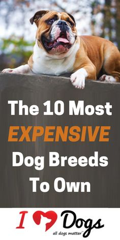 Why that breed?-- Need lots of answers