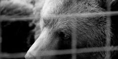Free Bear Caged at Ice Cream Parlor for 18 Years! PETITION - Care2 News Network