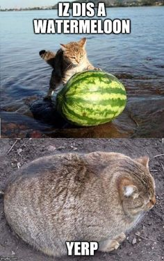 More memes, funny videos and pics on Funny Animal Pictures, Funny Images, Funny Photos, Animal Jokes, Funny Animals, Cute Animals, Stupid Funny Memes, Funny Fails, Tennis Funny
