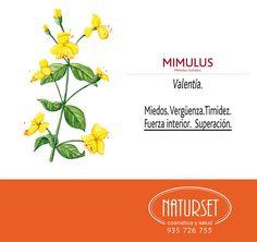 Mimulus - Flores de Bach de NATURSET Bach Flowers, Reiki Room, Flower Cards, Botanical Illustration, Flower Power, Natural Remedies, Therapy, Healing, Ayurveda