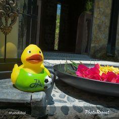 A #JATravelDuck at our #JAManafaru. Picture courtesy of @stuindubai.