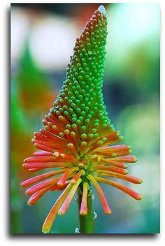 Vibrant Exotic flower!! @christina jaimes