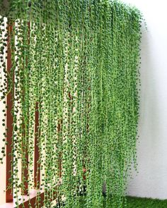 Balcony privacy Balcony privacy screen Balcony plants Hanging plants Plants - All About Balcony