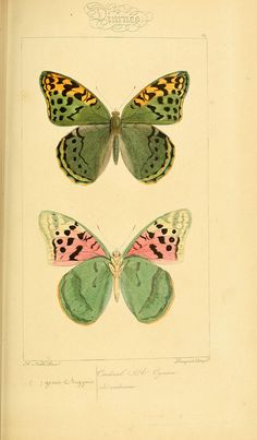 n280_w1150 by BioDivLibrary, via Flickr