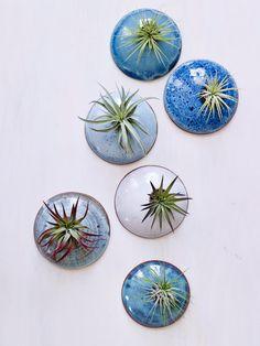 Dit is een aanbieding voor een set van glazen muur plantenbakken MADE TO ORDER. Deze muur planters werden gegooid op het wiel en vervolgens hand gesneden om een biologische blik. Ze zijn dan geglazuurd in oceaan tonen voor een andere natuurlijke organische look die doet denken aan de zee. Deze opknoping peulen maken dergelijke mooie huizen voor lucht plantenbakken en zijn perfect voor het toevoegen van een beetje groen en leven tot iemands muur. Gewoon laat het me weten welke kleuren u wilt…