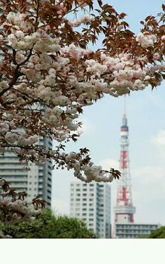 Tokyo Tower meets cherry blossoms, Flickr