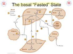 Basal Fasted State Metabolism