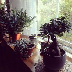 Ikkunalla alkaa olla tungosta. Note to myself, kun seuraavan kerran ostan viherkasvin on sen oltava amppeliin menevä kukka. Muuten ei mahdu. Vihersisustus ei meillä ole ohimenevä trendi. Plants, Plant, Planets