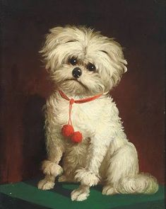 """""""Portrait of a Maltese dog, oil on canvas,19th c. by Anonymous British painter."""" (wikimedia commons; public domain)"""