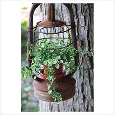 old lantern hanging planter