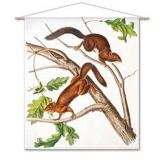Combo Design is officieel dealer van Naturalis Unlimited ✓ Eekoorns van John James Audubon doek ✓ Verschillende varianten verkrijgbaar ✓ Gratis verzending (NL) John James Audubon, Van, Design, Vans, Vans Outfit