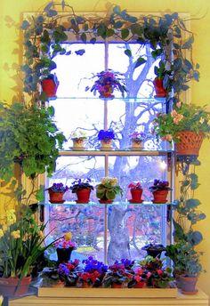 window bay with plants