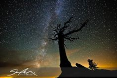 Yosemite National Park - Olmsted Tree Astro by sr1012, via Flickr