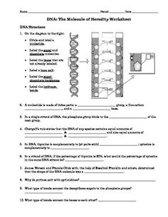 Dna Replication Worksheet With Answer Key Worksheets Stuff To Try
