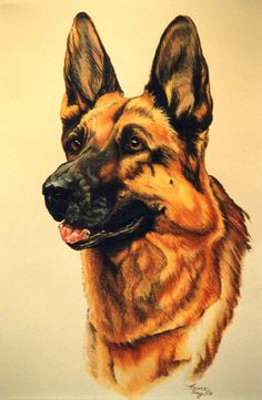 Rascal Randy was his name and I miss that dog like crazy German Sheperd Dogs, German Dogs, German Shepherds, Shepherd Dogs, Animal Paintings, Animal Drawings, German Shepherd Tattoo, Most Beautiful Paintings, Watercolor Animals