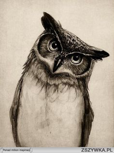 Desenho2 ---I love OWLS...this one looks so real.