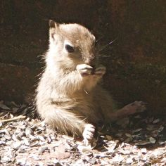Baby Squirrel Chillin' by OL Pete on Flickr