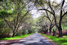 Avenue of Oaks, Magnolia Plantation, Charleston, SC.