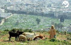 City of Tetouan, Morocco مدينة تطوان في المغرب