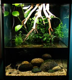 riparium plants - Google Search