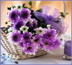 purple-chrysanthemums.jpg (1024×918)