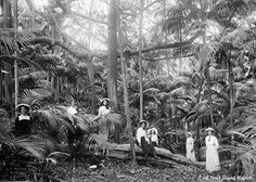 Many thanks to Ian Hutton from the Lord Howe Island Museum, who searched the archives and found a collection of great old black and white photographs. We hope you enjoy this beautiful group portrait taken on the Island in 1912.