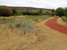 Hiking River Access Trail in Police Point Park, Medicine Hat, Alberta, Canada #hiking