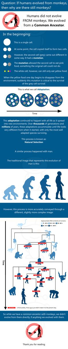 Evolution Infographic--science must co-exist with creation. I believe that God created science so humans can understand the world around them. Science Classroom, Teaching Science, Life Science, Science And Nature, Science Quotes, Science Fair, Science Education, Teaching Tools, Science Experiments
