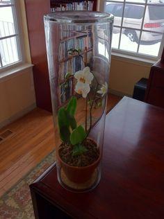 Protect indoor plants