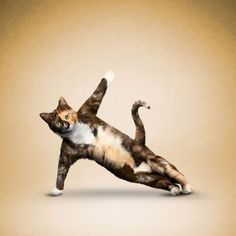 Yoga became one of the popular activities at this time, including for cats and dogs! Since 2005, a photographer Dan Borris has helped cats and dogs find their style by taking pictures of them in va…