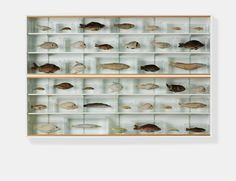 Isolated Elements Swimming in the Same Direction for the Purpose of Understanding (Right), 1991  Damien Hirst