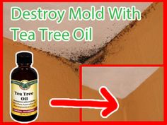 How To Naturally Remove Mold With Tea Tree Oil - Thehomesteadsurvival